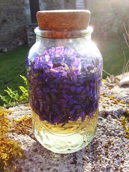 Vin de violette